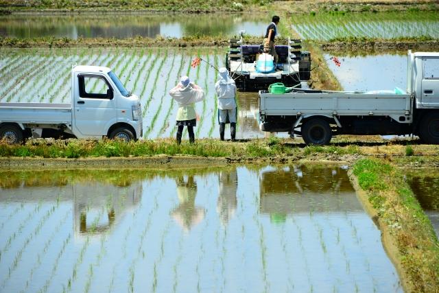 米,農家直送